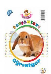 Efecan Tavşanları Öğreniyor