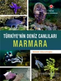 Marmara - Türkiye'nin Deniz Canlıları (Ciltli)