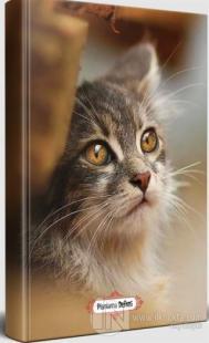 Minik Kedi - Planlama Defteri