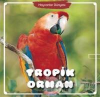 Tropik Orman - Hayvanlar Dünyası Kolektif