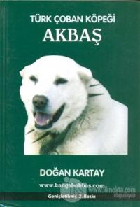 Türk Çoban Köpeği Akbaş