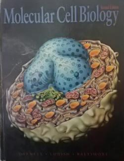 MOLECULAR CELL BİOLOGY