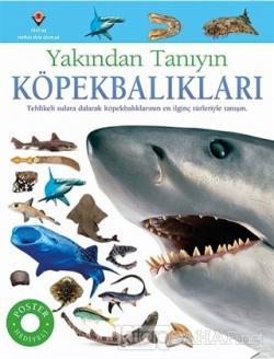 Köpekbalıkları - Yakından Tanıyın