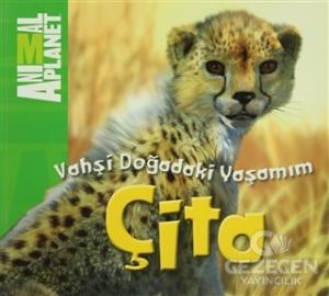 Vahşi Doğadaki Yaşamım: Çita