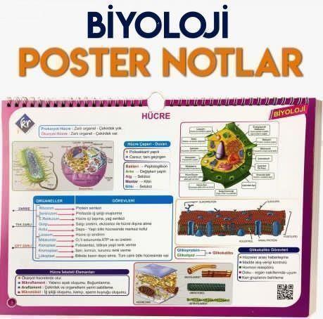 TYT Biyoloji Poster Notlar