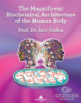 The Magnificent Biochemical Architecture Of The Human Body