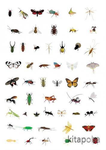 Böcek Atlası - Fatih Dikmen - kitapoba.com