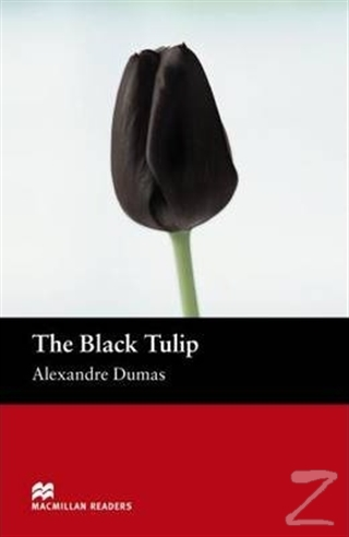 The Black Tulip Stage 2