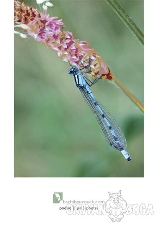 Böcekçiler Çarşısı - Ümit Şener Ta - Ozan Yayıncılık