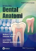 Woelfel Dental Anatomi