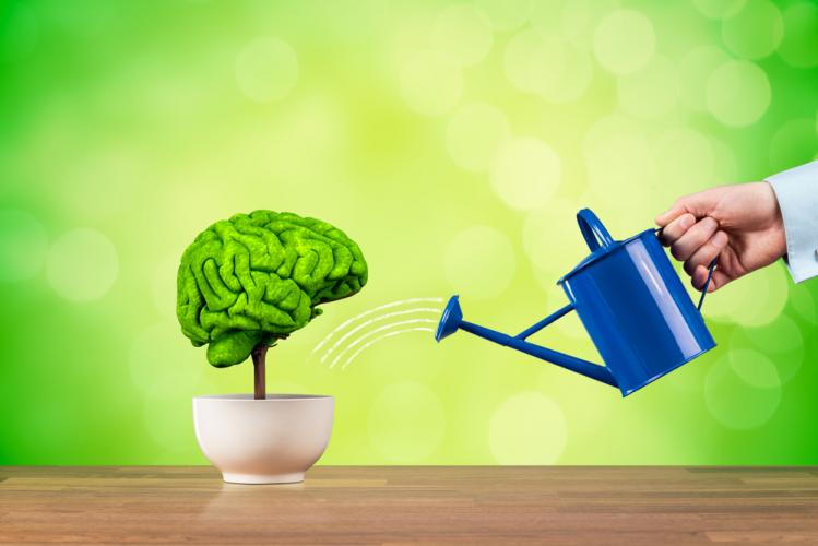 NLP ile Beyin Programlama Sertifika Programı